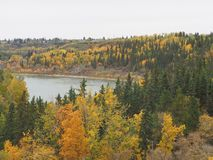Autumn Leaves And North Saskatchewan River In Edmonton Alberta. Colourful autumn leaves with spruce trees and the North Saskatchewan River in Edmonton Alberta royalty free stock image