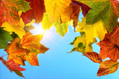 Colourful autumn leaves and the sun in the blue sky Royalty Free Stock Images