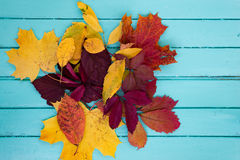 Colourful autumn leaves on wooden boards Royalty Free Stock Photos