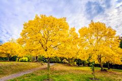 Australian autumn in Mount Lofty, Adelaide Hills. Colourful autumn in Mount Lofty, Adelaide Hills, South Australia royalty free stock images