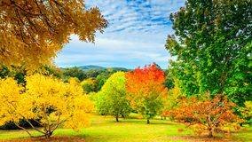 Australian autumn in Mount Lofty, Adelaide Hills. Colourful autumn in Mount Lofty on a day, Adelaide Hills, South Australia stock photos