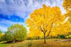 Australian autumn in Mount Lofty, Adelaide Hills. Colourful autumn in Mount Lofty on a day, Adelaide Hills, South Australia stock photo