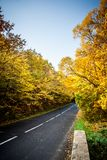 A colourful autumn road. Autumn road with yellow trees Royalty Free Stock Image