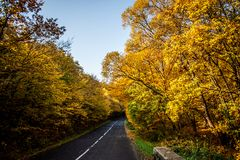 A colourful autumn road. Autumn road with yellow trees Royalty Free Stock Photography
