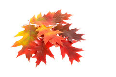 Colourful autumn's leaves. Stock Photo