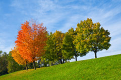 Colourful Autumn Trees. Bright red and gold maple trees among green trees on a slope of a hill royalty free stock photography