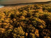 Colourful autumn trees Stock Photos