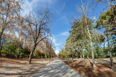 Colourful autumn trees with yellow leafs in the Retiro Park in Madrid, Spain.  royalty free stock photo