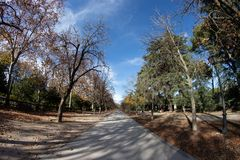 Colourful autumn trees with yellow leafs in the Retiro Park in Madrid, Spain.  royalty free stock images