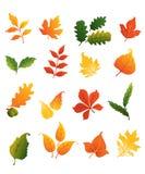 Colourful autumnal leaves set. Isolated on white background for seasonal design stock illustration