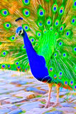 Colourful background for creative design with saturated colours. Colourful peacock bird background for creative design with saturated colours Stock Images