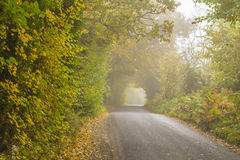Colourful background made of fallen autumn leaves. On the small road in foggy day Stock Photos