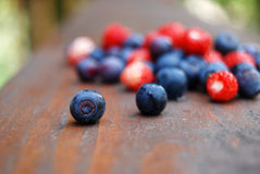 Colourful berries. Close-up of delicious forest berries on the wooden background Stock Photography