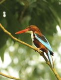 Colourful bird Stock Images