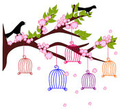 The Colourful Bird Cages. Are hanging on the tree Royalty Free Stock Photography