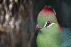 Colourful bird. A green bird with red and white markings Royalty Free Stock Photos