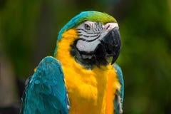 Colourful bird. Tropical bird from Youcatan in Mexico Stock Photo