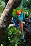 Colourful bird. Tropical bird from Youcatan in Mexico Stock Image