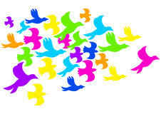 Colourful Birds. Illustration of colourful birds isolated on white Royalty Free Stock Images