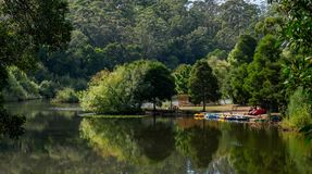 Colourful boats for hire on a lake. A man waits for tourists to hire his colorful boats on picturesque Lake Jubilee in Daylesford, Victoria Australia Royalty Free Stock Photos