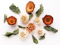 Colourful bright pattern made of dried flowers. Flat lay, top view Royalty Free Stock Photo