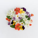 Colourful bright pattern made of flowers Royalty Free Stock Images