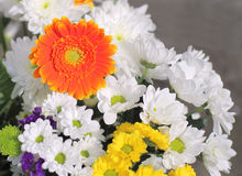 Colourful bunch of flowers Royalty Free Stock Image
