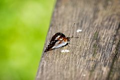 Colourful butterfly enjoys the sun on a wooden bench in spring. Depth of field royalty free stock images