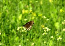 Colourful butterfly on flower looking very nice stock photography