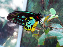 Colourful butterfly Stock Images