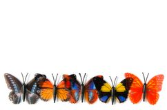 The colourful butterfly isolated on white background