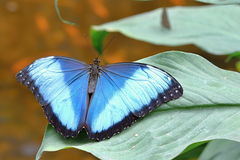 Colourful Butterfly on the Leaf. Photo of Colourful Butterfly on the Leaf Stock Photos