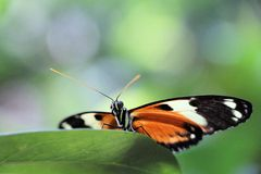 Colourful butterfly. Colourful butterfly on red leaf stock images