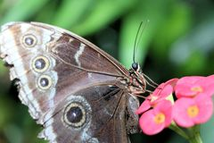 Colourful butterfly. Royalty Free Stock Images