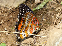 Colourful butterfly Royalty Free Stock Images