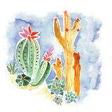 Colourful cactuses and succulents hand drawn watercolor royalty free illustration