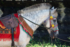 Colourful Cambodian Ceremonial Horse Royalty Free Stock Photo