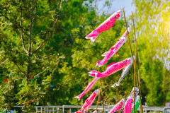 Colourful carp streamers or Koinobori flutter Royalty Free Stock Photography