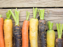 Free Colourful Carrot Varieties Royalty Free Stock Photos - 56419818