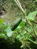Colourful caterpillar over a leave. royalty free stock photography