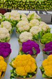 Colourful Cauliflower (brassica oleracea) Royalty Free Stock Photography