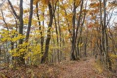 The colourful changing colour trees in autumn around Fuji Mountain at Lake Kawaguchiko, Japan stock photography