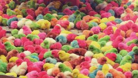 Colourful chicks Royalty Free Stock Photos