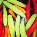 Colourful chilli Stock Photography