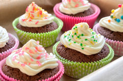 Colourful Chocolate Cupcakes Royalty Free Stock Image