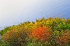 Colourful coastal plants Stock Images