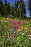 Wildflowers trees and cabin, Black Forest, Germany Royalty Free Stock Image