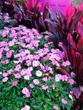 Pink Flowers and Shrubs in Designer Garden Stock Image