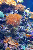 Colourful coral reef Stock Photos