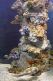 Colourful coral reef Royalty Free Stock Photos